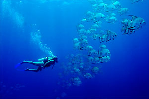 Scuba diving with school of fish in Caribbean Sea